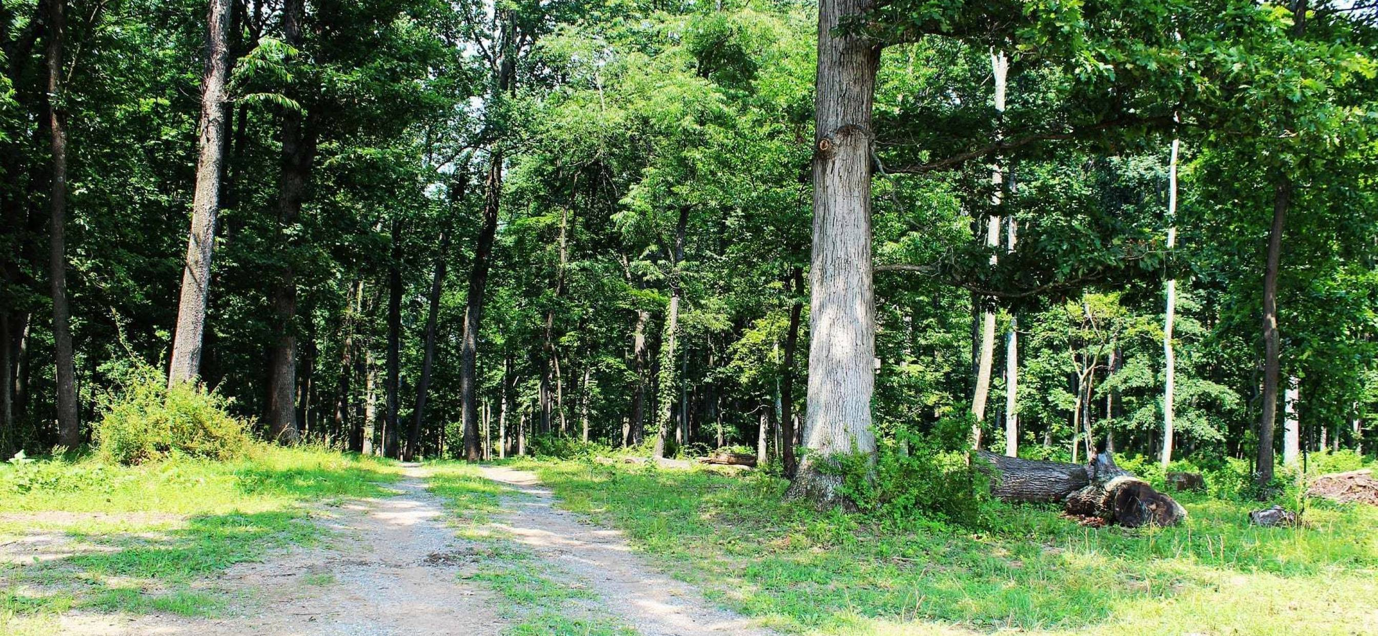 Know Your Easement Rights Before Buying Land