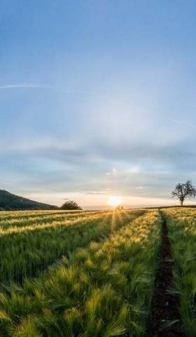 Why Crop Rotation Benefits the Farmer and His Environment