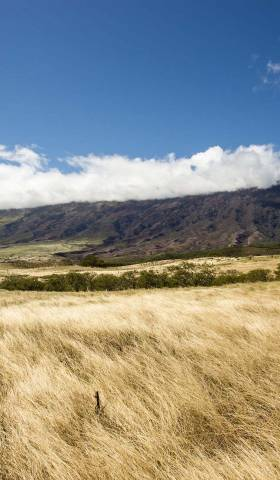 Story Loans: How to Finance Your Land Purchase