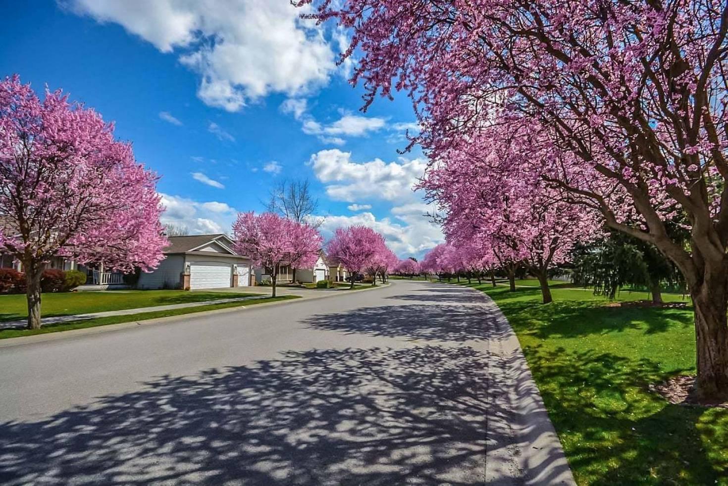 Choose Land Build Home Neighborhood