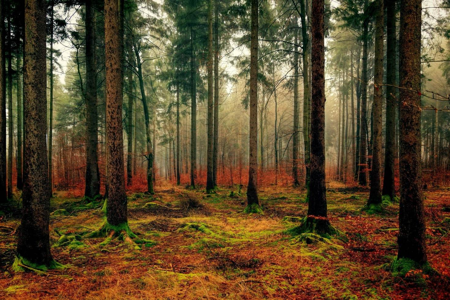 Timberland Landscape