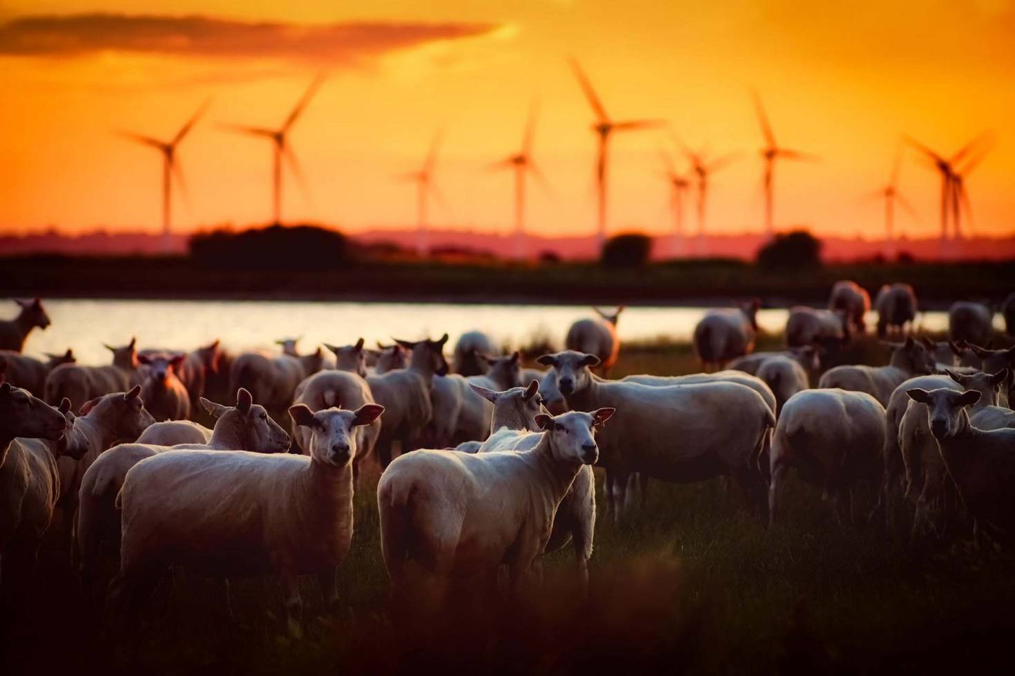 Agriculture and Wind Farms