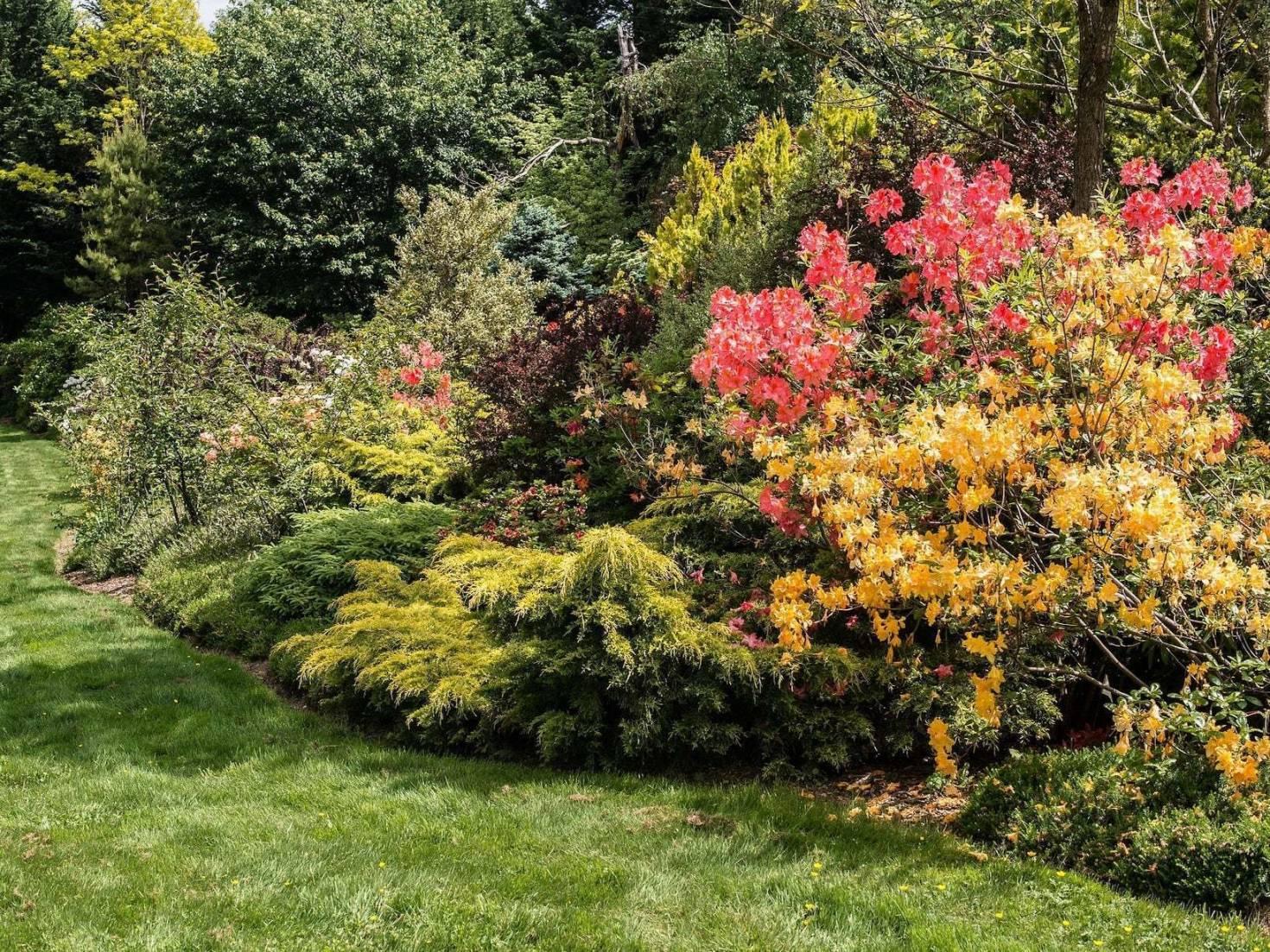 Backyard Naturescape