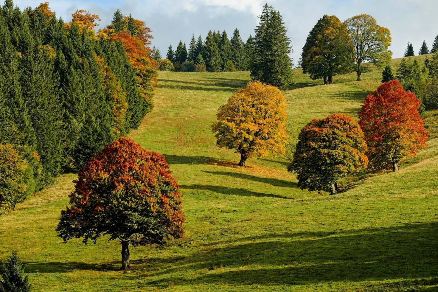 Colorful Forest Landscape