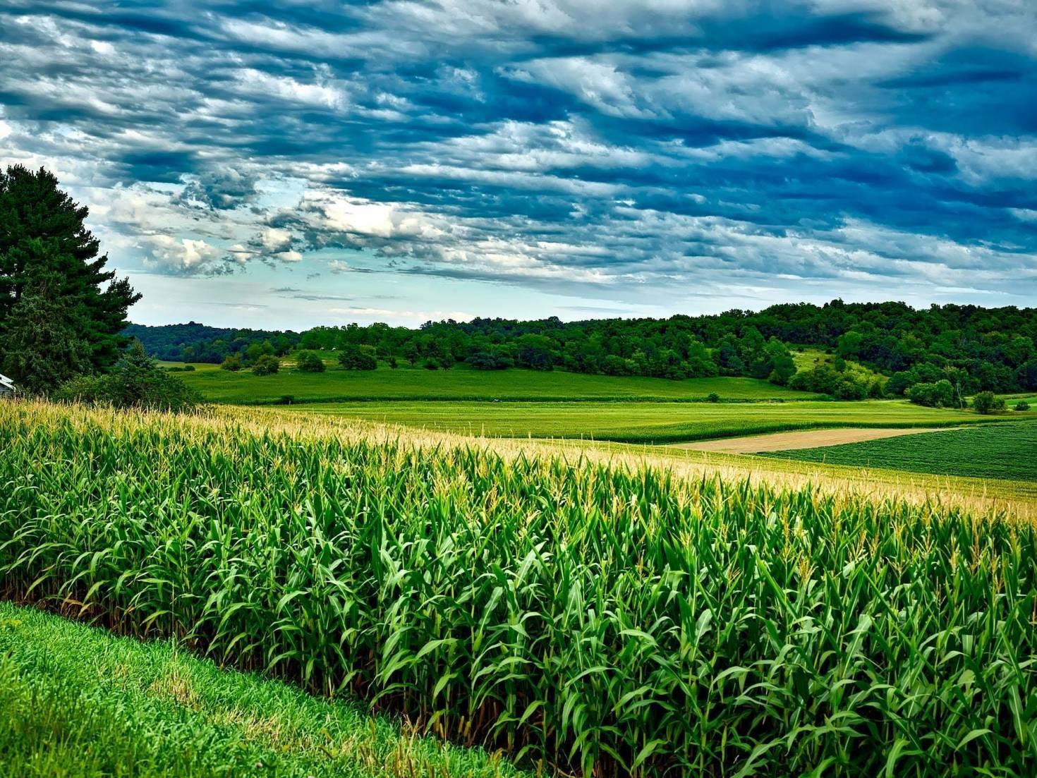 Crop Rotation With Corn