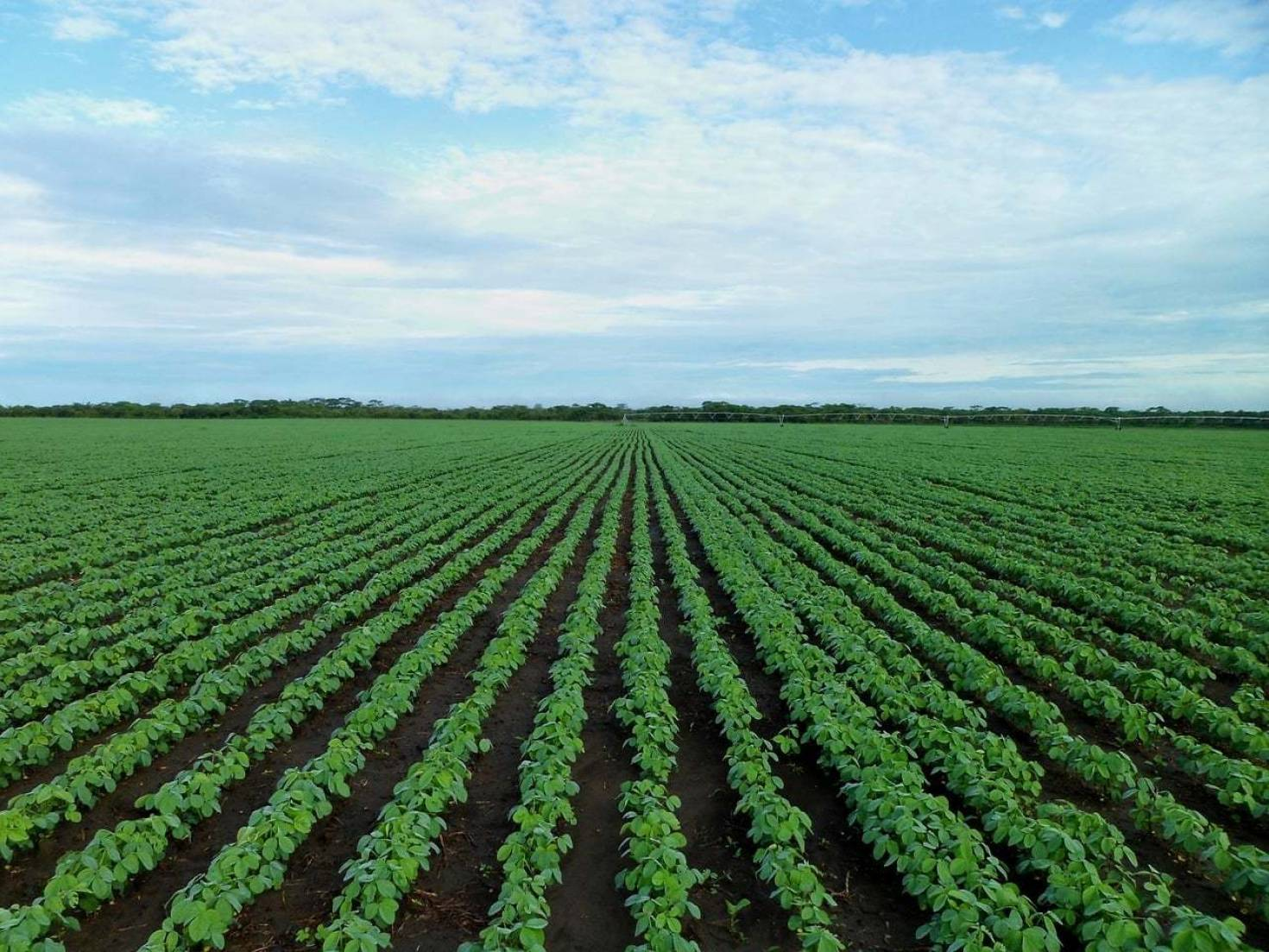 Crop Rotation With Soybeans