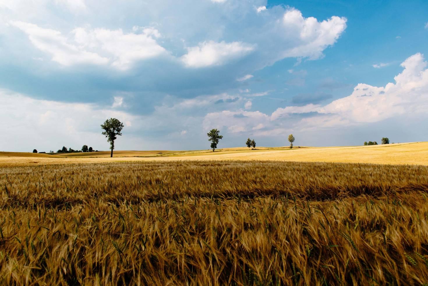 A Farm Landscape