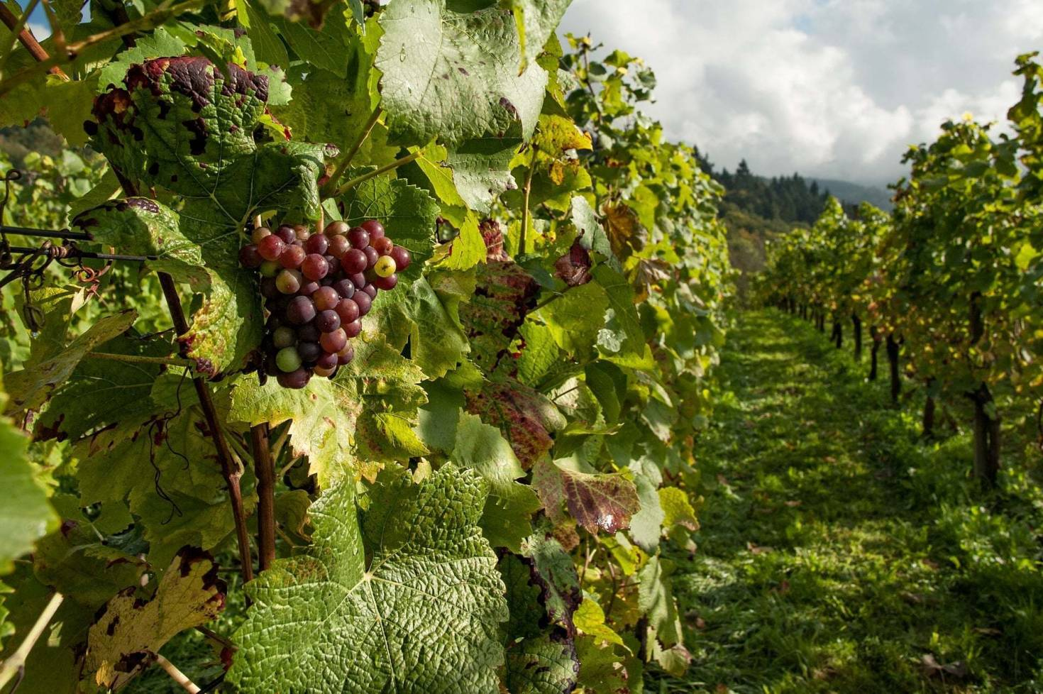 Financing A Vineyard
