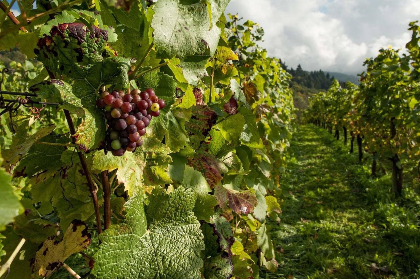 Financing A Vineyard