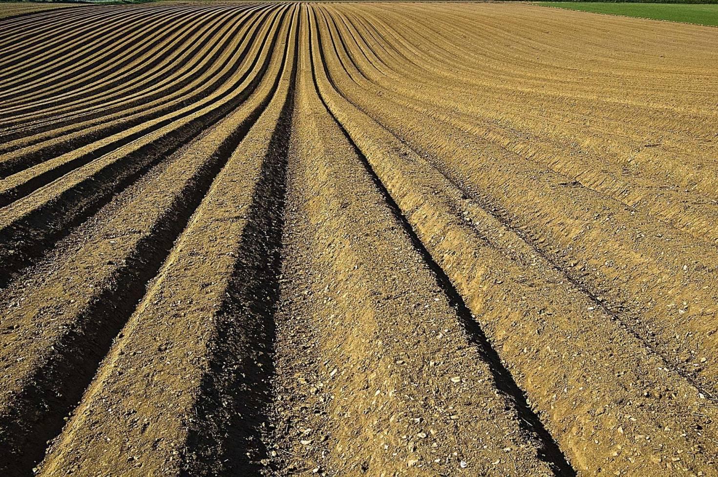 Furrowed Farm Land