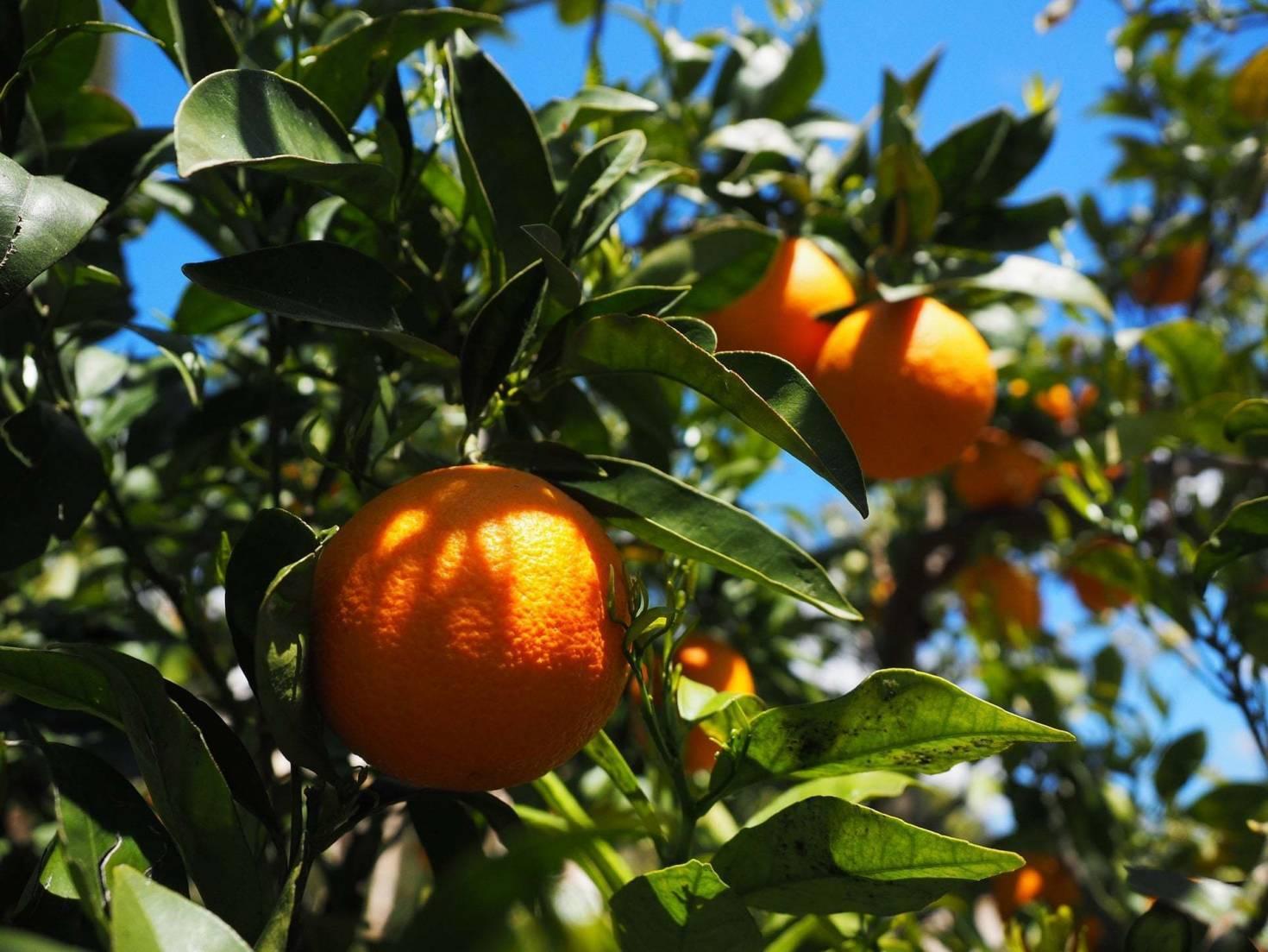 Large Citrus Farm Owners