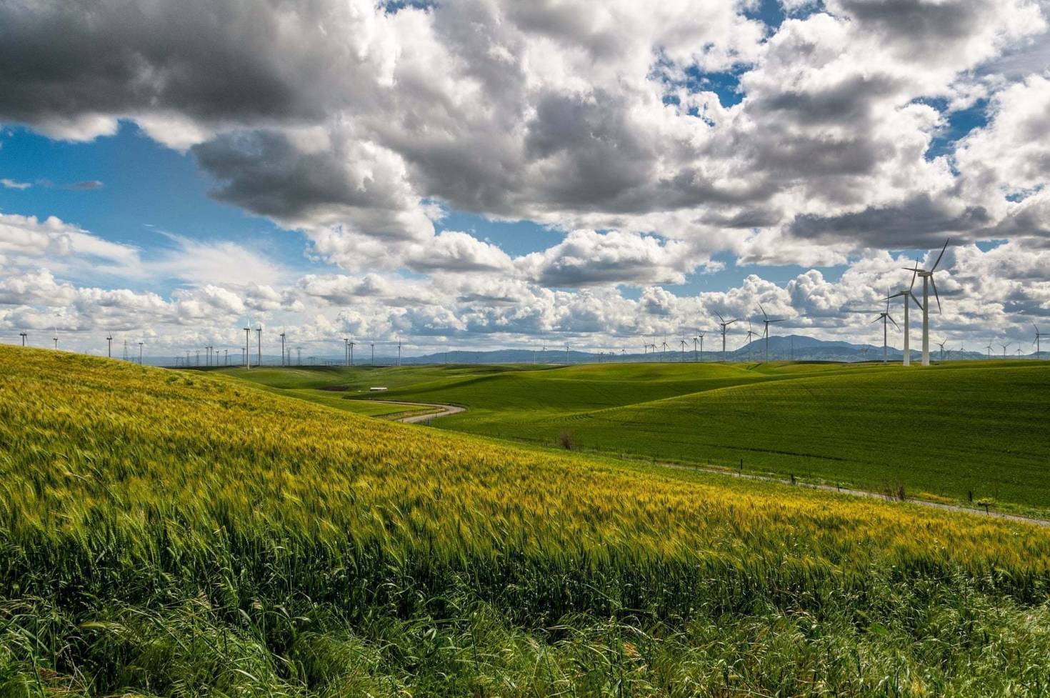 Large Wind Farm