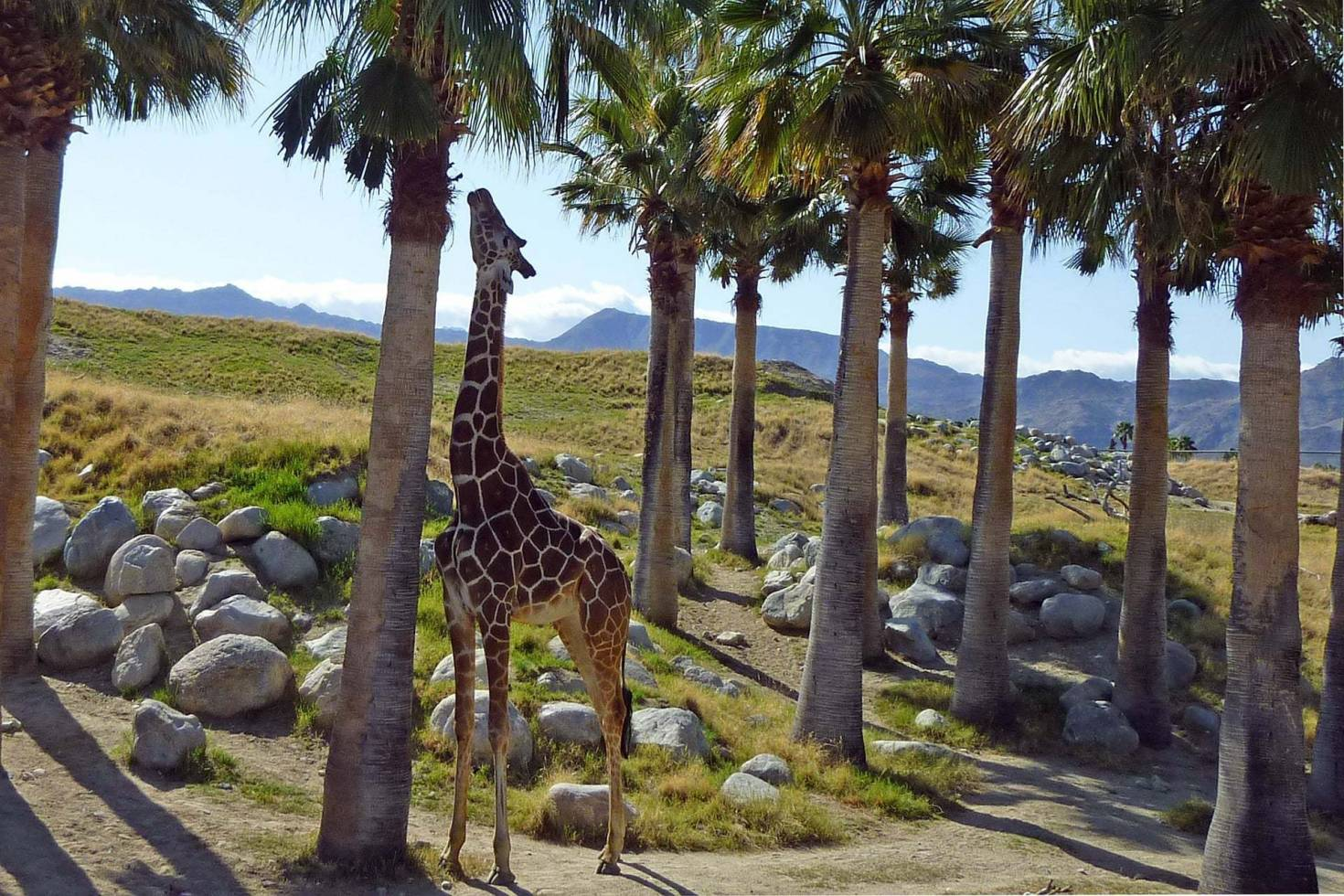The Living Desert Zoo and Gardens State Park