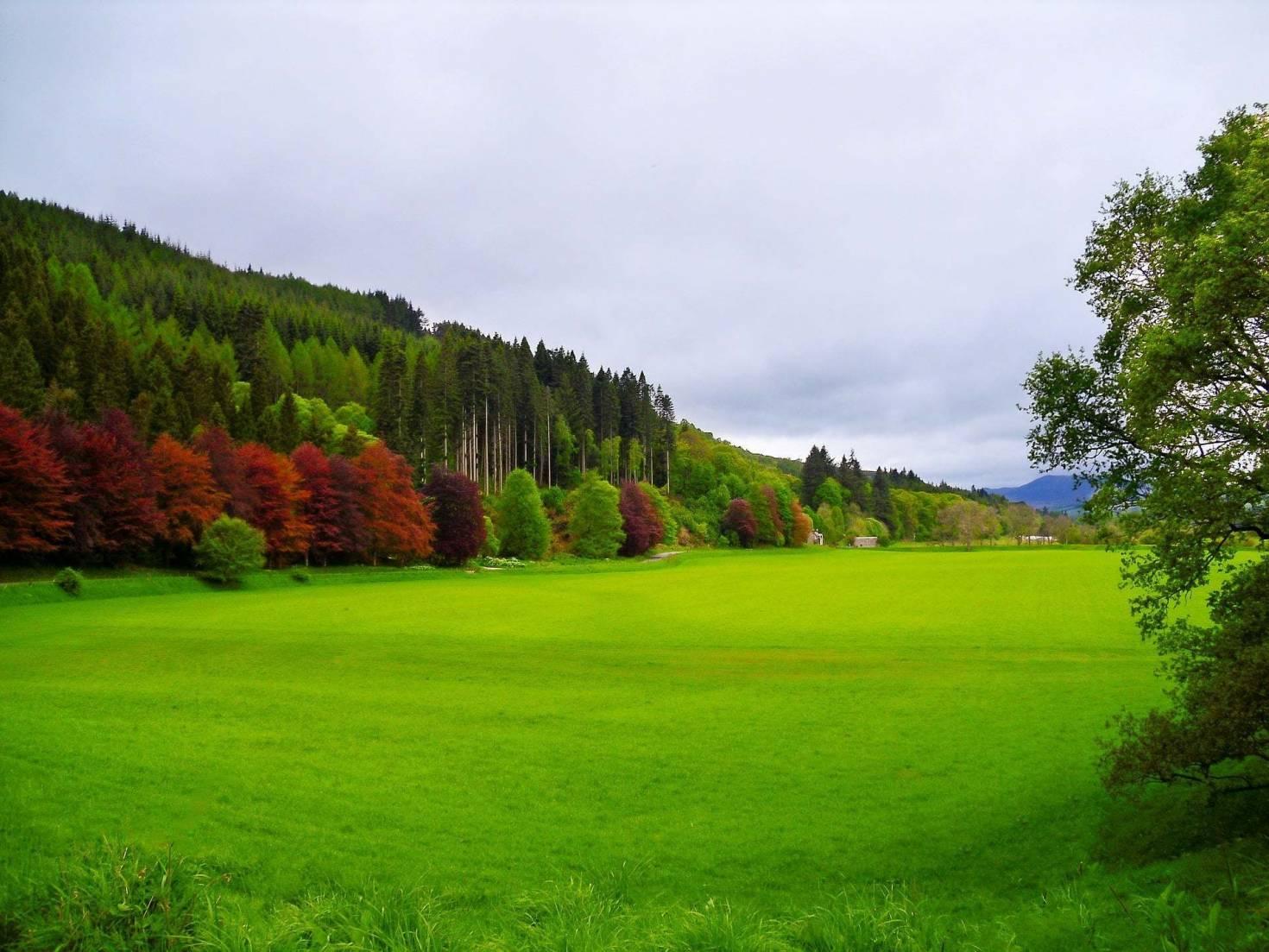 Open Green Landscape