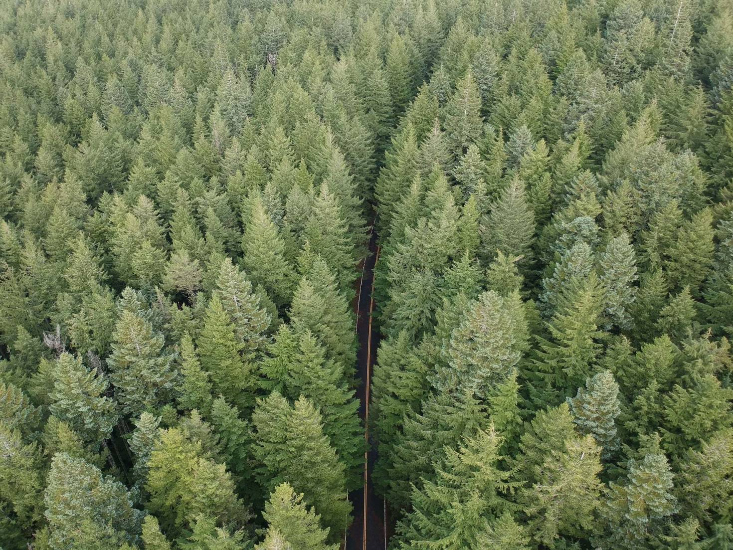 Oregon Timberland