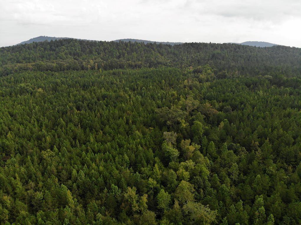 87 Acres of Recreational Land for Sale in Talladega, Alabama